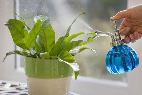 آبیاری گیاهان خانگی با اب معدنی
