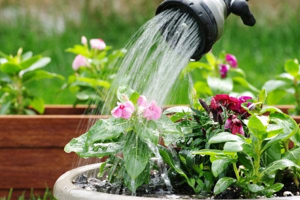 روش های آب دادن به گیاهان خانگی