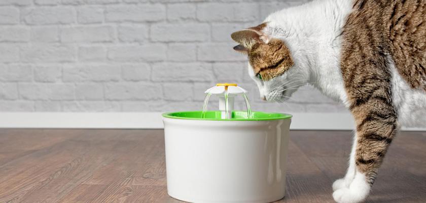 بهترین آب برای حیوان خانگی