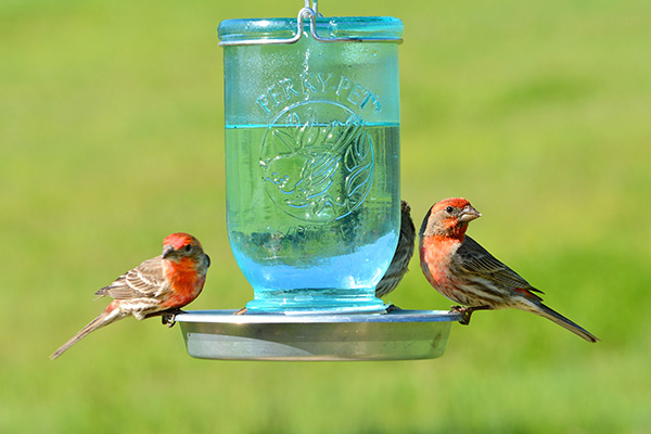 مزیت های آب معدنی برای حیوانات خانگی