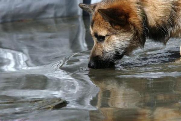 مشکلات آب چاه و چشمه در بدن حیوانات